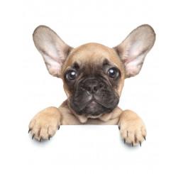 Deka mikro-plyš Puppy Bulldog Polyester 120x150 cm